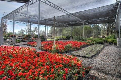 Truckee, California Garden Center