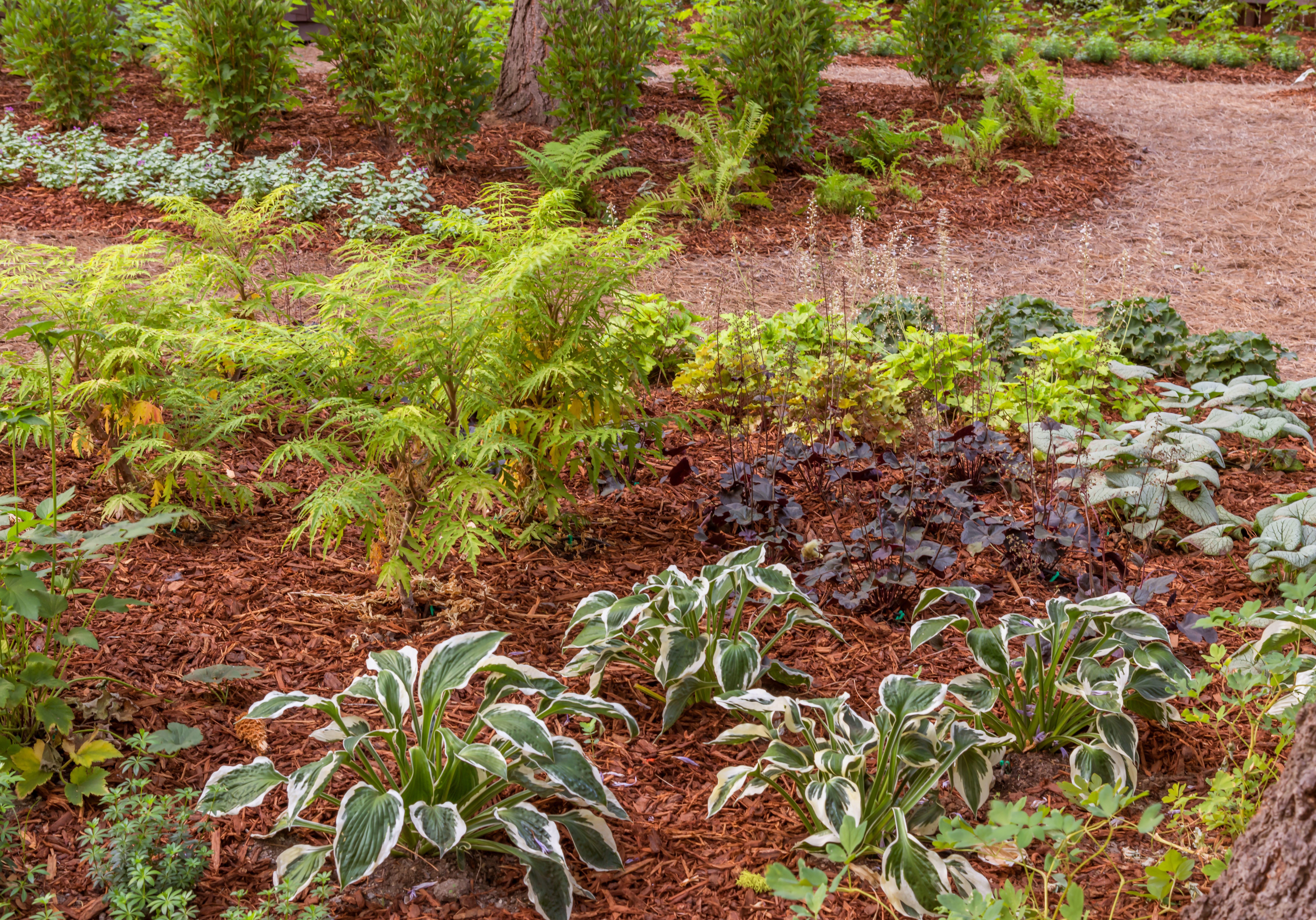 Tahoe City, CA Garden Maintenance Services