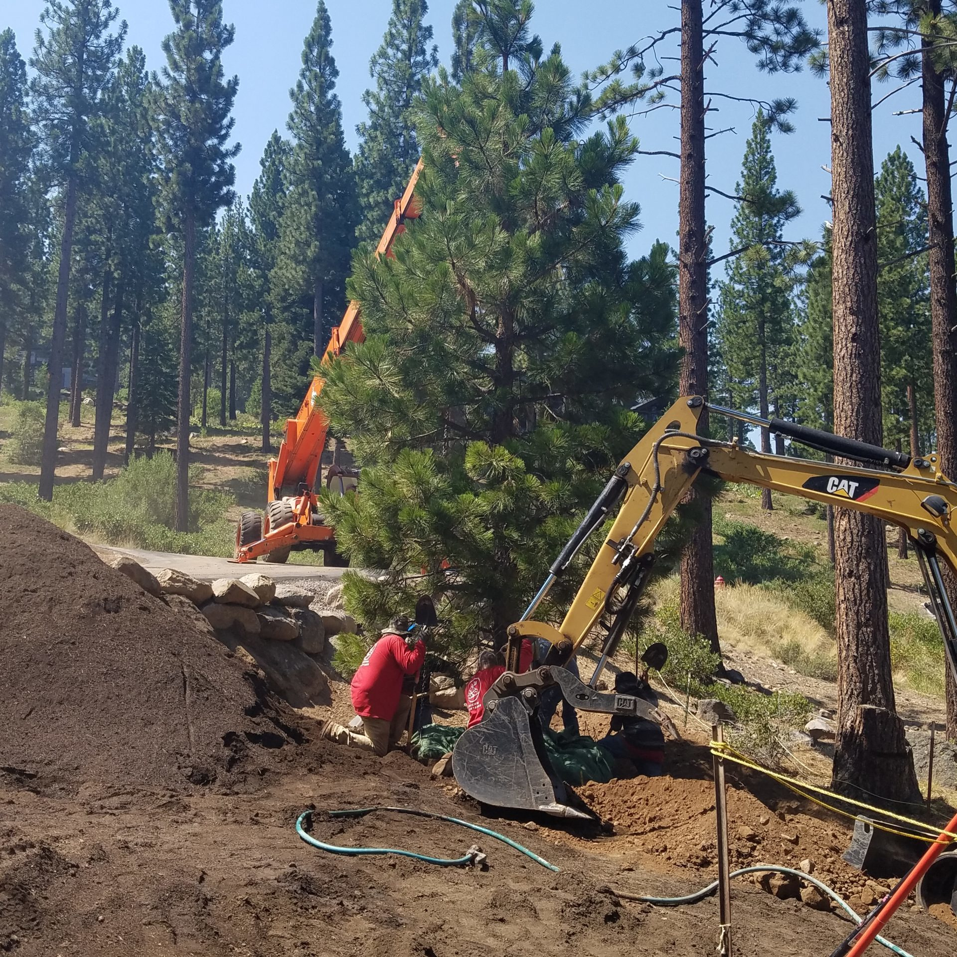 truckee-landscaping-trees